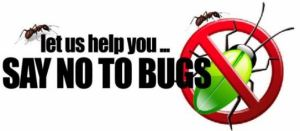 Bed Bugs Infestation Control Services
