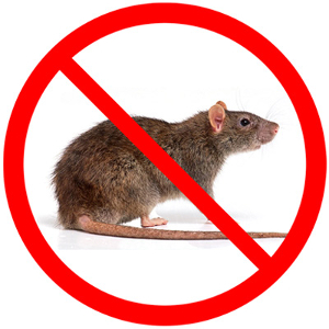 mice control langley and mice control surrey and Mice Control Delta - Mice Control Abbotsford - Mice Control Burnaby - Mice Control vancouver