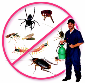 Pest control surrey - Pest control langley - pest control services British Columbia Canada and Exterminator surrey